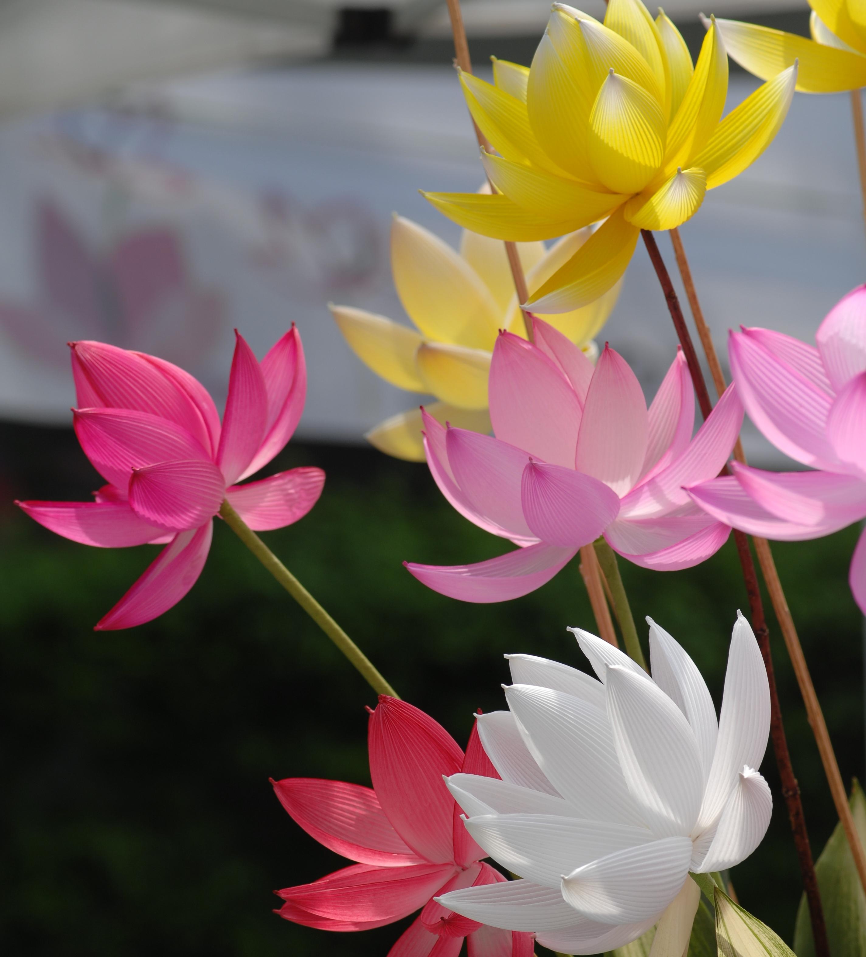 지화연꽃만들기